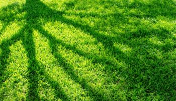 Lawn in Massapequa, Newyork that took lawn aeration and fertilization services from organic solutions
